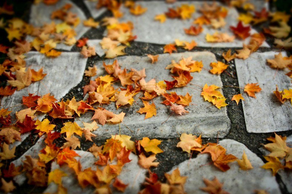 Μετά τα μέσα φθινοπώρου, καθώς πέφτουν τα φύλλα, όλες οι επιφάνειες πρέπει να καθαρίζονται.