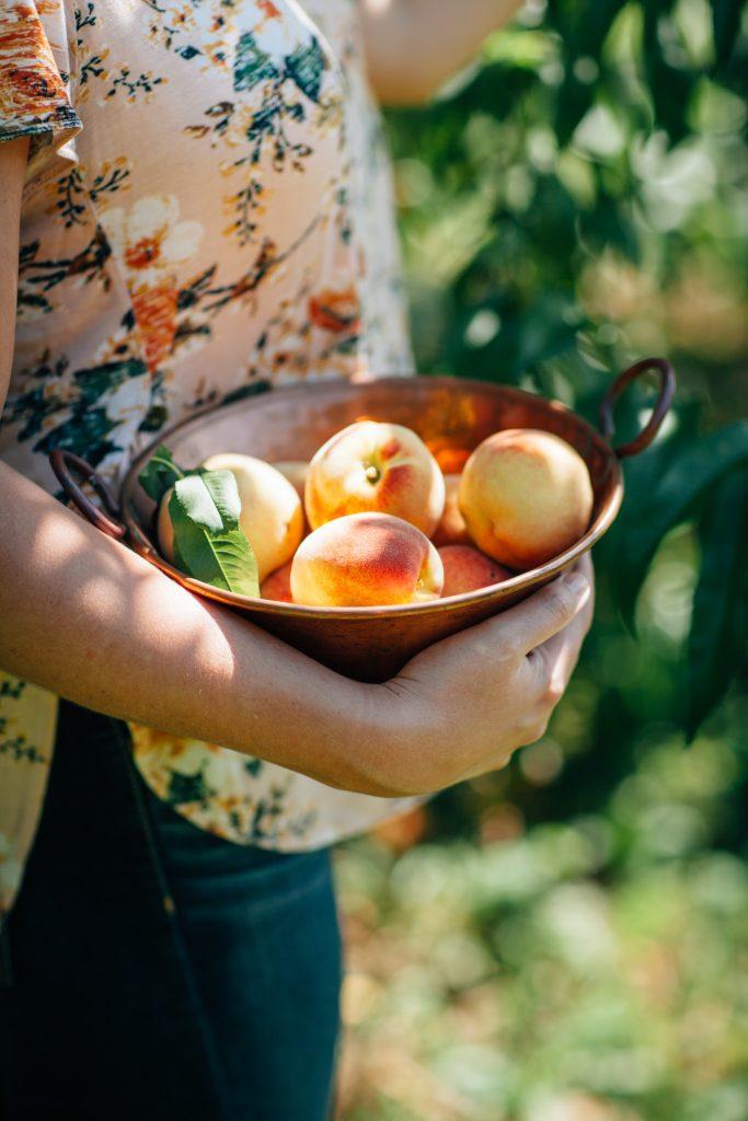 Η ροδακινιά όταν ζει με ένα άνετο φυτοδοχείο παράγει καρπούς, που μπορεί να είναι λίγοι, αλλά  ωριμάζουν σε μικρότερο χρονικό διάστημα.