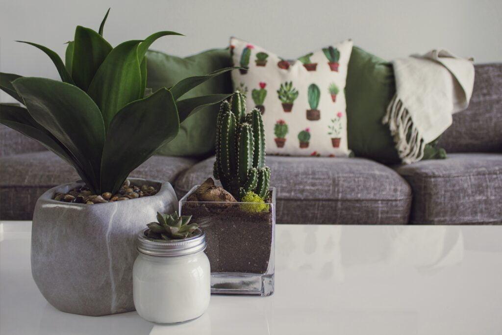 Τα φυτά εσωτερικού χώρου μπορούν να καθαρίσουν την ατμόσφαιρα στο σπίτι σας και να ομορφύνουν το περιβάλλον σας. Προμηθευτείτε λοιπόν, τα κατάλληλα είδη για διακόσμηση και αποτοξίνωση.